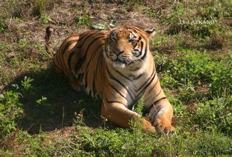 Tigre.Cabarceno | fotos de Mascotas y animales