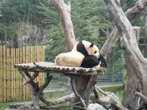 tigre: fotografía de Zoo Aquarium de Madrid, Madrid ...
