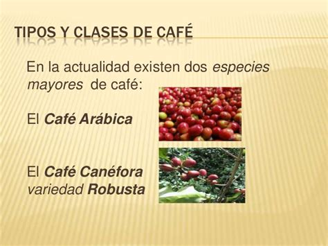 Tipos clases cafe