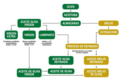 Tipos de Aceites de Oliva - Sierra las Villas