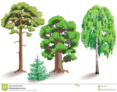 Tipos De árboles Ilustración del Vector   Imagen: 46477601