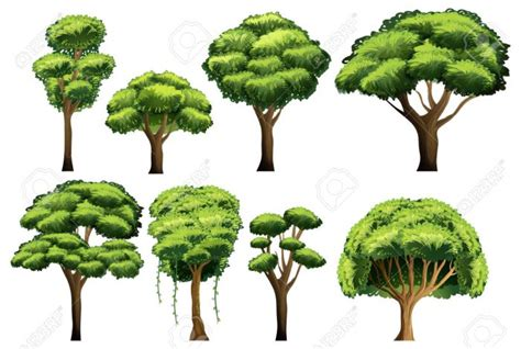 Tipos de árboles que puedes identificar | Arboles frutales