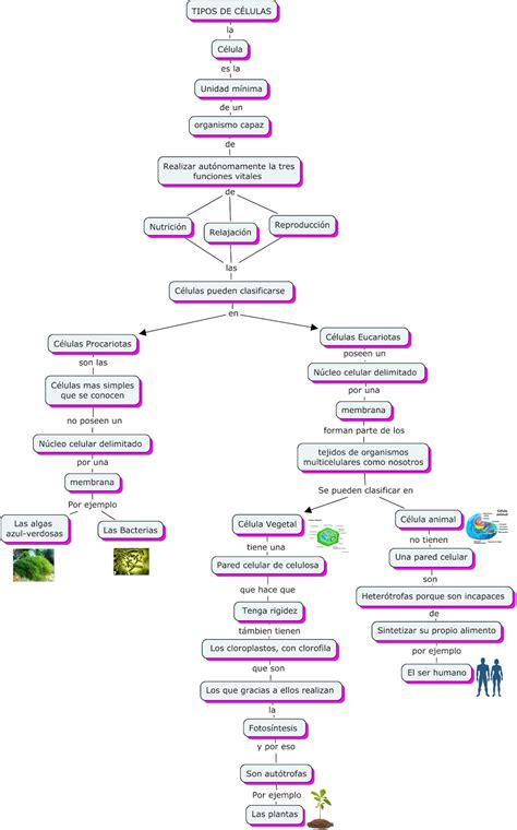 Tipos de células: mapa conceptual de los tipos de células