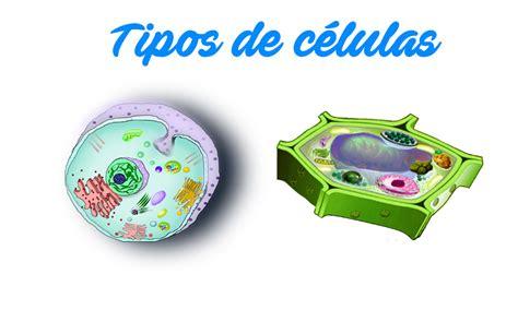 Tipos de células   Tipos de