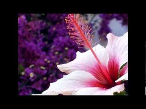 Tipos de Flores!! | Doovi