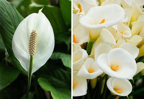 Tipos de flores para casa   Revista Westwing
