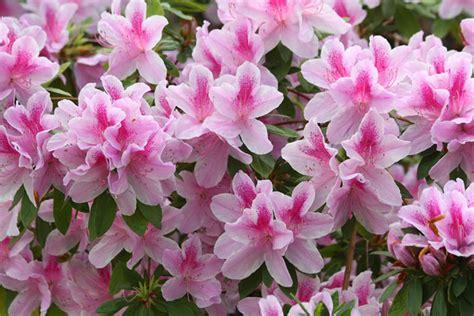 Tipos de flores para jardim suspenso e vertical ...