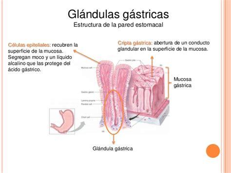 Tipos de glandulas