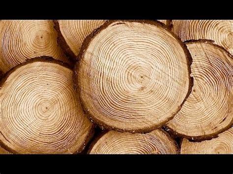 Tipos de madera   Madera natural, artificial, finas, duras ...