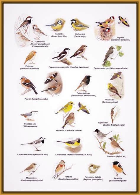 tipos de pájaros cantores Archivos   Imagenes de Pajaros