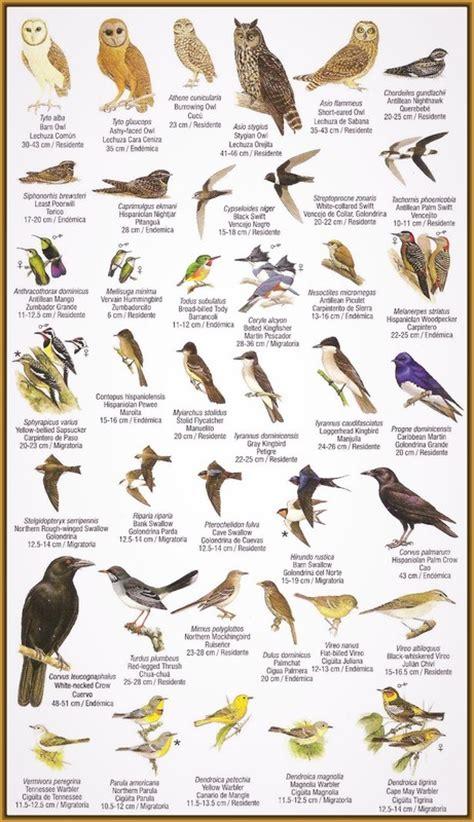 tipos de pájaros clarines Archivos   Imagenes de Pajaros