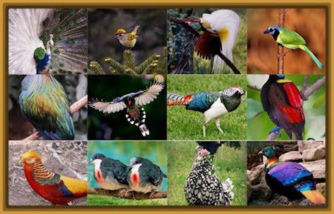 tipos de pájaros silvestres y sus nombres Archivos ...