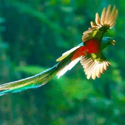 Tipos de Pájaros y Aves exóticos y tropicales