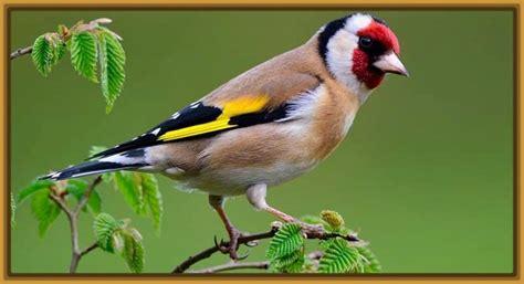 tipos de pájaros y sus nombres Archivos   Imagenes de Pajaros