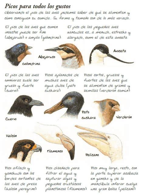 Tipos de picos de las aves   Mascotas