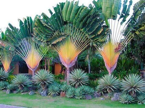 Tipos de Plantas: +65 Espécies Úteis, Exóticas e Decorativas