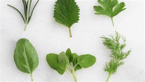 Tipos de plantas con semillas | Geniolandia