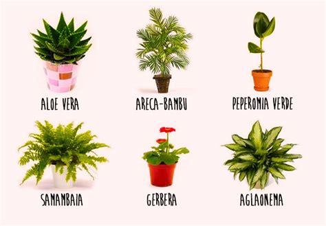 Tipos De Plantas De Interior   Diseños Arquitectónicos ...