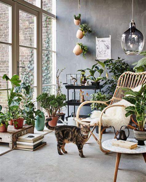 Tipos de Plantas de Interior Para Poca Luz - Estreno Casa