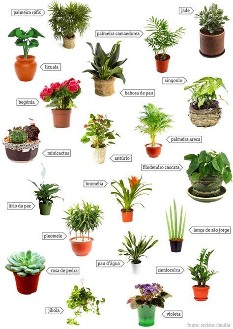 tipos de plantas para jardim   Entenda Antes Arquitetura