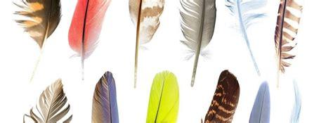 Tipos de plumas en las aves y sus funciones -canalHOGAR
