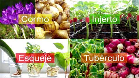Tipos De Reproducción Asexual En Plantas De Forma Natural ...