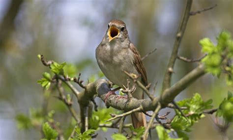 To be alone in the dawn chorus reminds us how precious ...