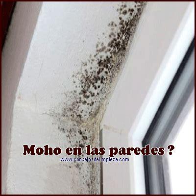 TODO SOBRE EL MOHO: QUÉ ES, COMO PREVENIRLO Y PASOS PARA ...