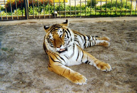 Tony, Tiger Truck Stop's controversial mascot, put to rest ...