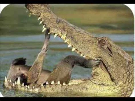 Top 10 Funny Animals, Funny Animal Pictures, Comedy Fails ...