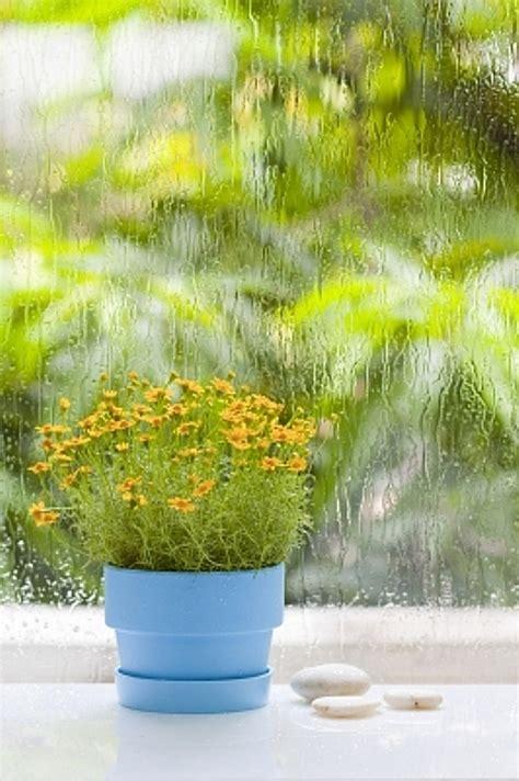 Top 10 plante Feng Shui de interior • Casa și Grădina
