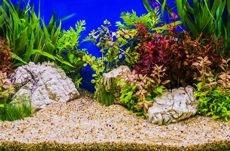 Top 3 Substrates to Use in Planted Aquariums