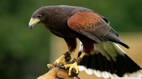 Top 9: Las Aves mas peligrosas del mundo! - Info - Taringa!