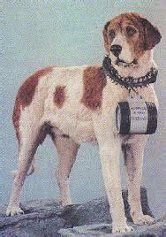 Top diez perros famosos - Mi Perro Es Único