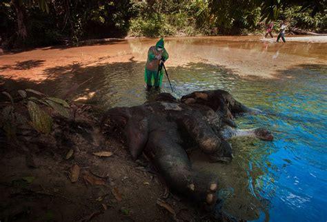 Topshots: Las imágenes más impactantes del mundo ...
