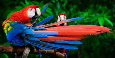 Tot Tours: Tropical Birds | NJMOM