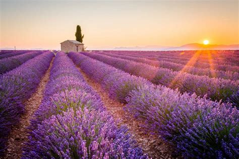 Tour N°8: Provence   DondyTour