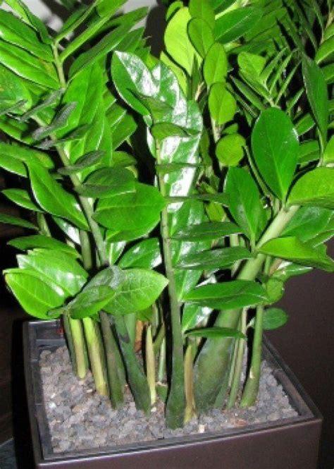 Traditional Feng Shui Plants | Feng shui, Houseplants and ...