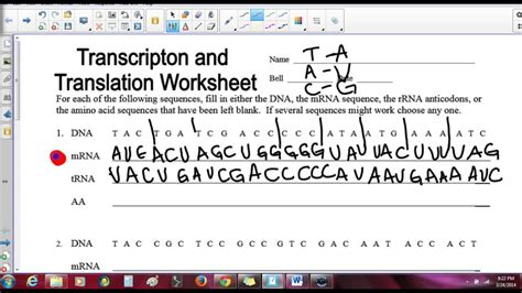 Translation And Transcription Worksheet   Kidz Activities