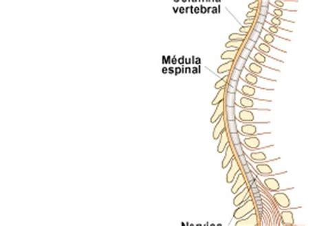 Trastornos en el sistema nervioso central Icarito