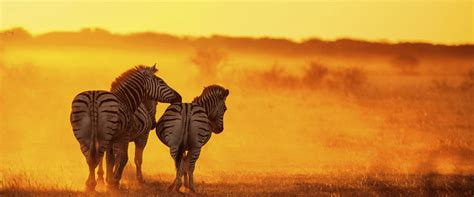 Travel Africa | STA Travel