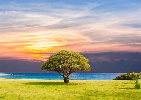 Tree Sea Grass · Free photo on Pixabay