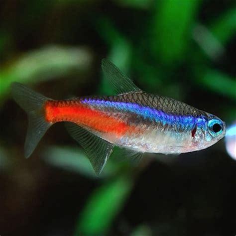 Tres Tipos de peces para tu Acuario | MascotasS.com