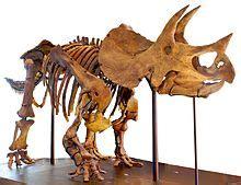 Triceratops - Wikipedia, la enciclopedia libre