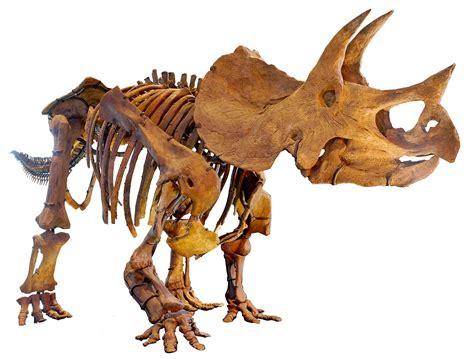 Triceratops - Wikipedia