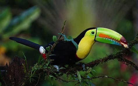 Trivia sobre Aves - Información y Características