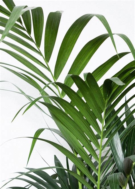 Tropic greens: The taste of Petrol and Porcelain ...