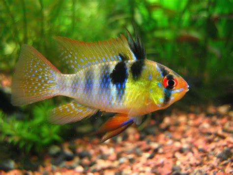 Tropical Aquarium Community Fish | Aquarium Design Ideas