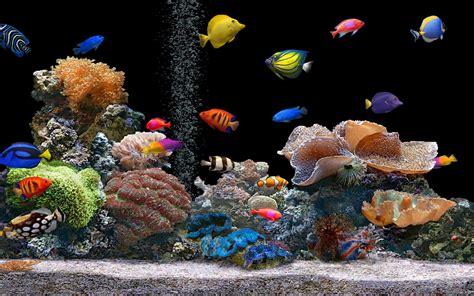 Tropical Aquarium Wallpaper   Amazing Wallpapers