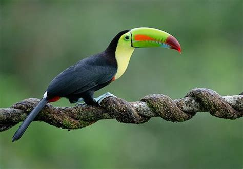 tropical bird :) | Tropical and Colorful Birds | Pinterest